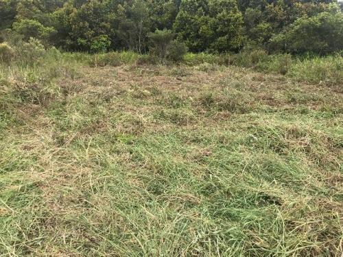 Vendo Terreno Lado Praia Vila Tupy Em Itanhaém Litoral Sp