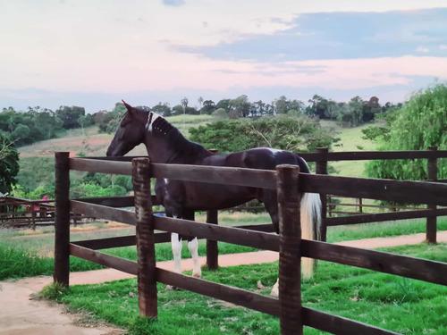 Imagem 1 de 5 de Mangalarga Pampa De Preto