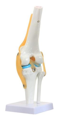 articular stem)