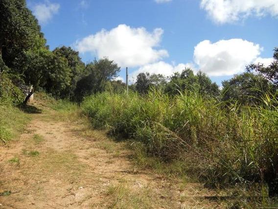 Terreno Para Venda Em Almirante Tamandaré, Mato Dentro - 1820030069 Mosacal