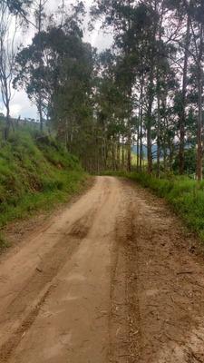 Fazenda Em Carvalhos Mg, Com 43 Ha , Bairro Dos Franceses , Local De Muitas Cachoeiras, Casa 05 Quartos , Altitude 1200 Metros. - 4625
