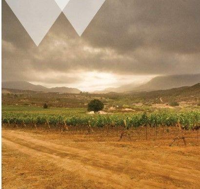 Vineyard For Sale / Viñedo En Venta Villa De Juarez ( San Antonio De Las Minas)