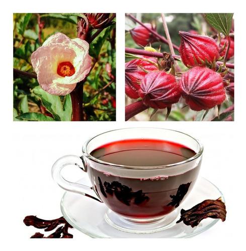 80 Sementes De Vinagreira Chá De Hibisco Roselle Caruru Cuxá