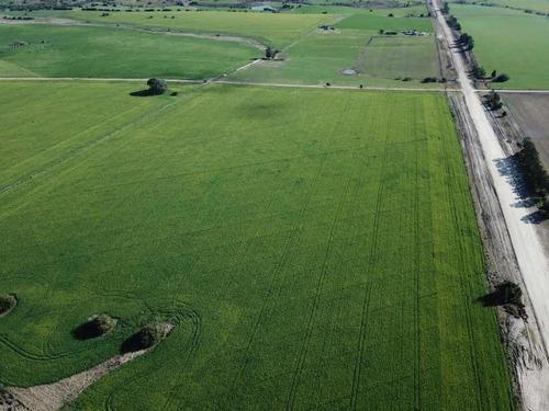 Campo Agricola 110 Has Colonia