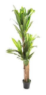 Jade Planta Artificial