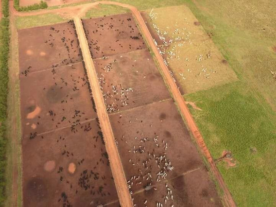 Fazenda Para Venda Em Brasilândia, Fazenda Na Região De Brasilândia Ms, 8.000 Hectares Porteira Fechada, - 36635_2-741577
