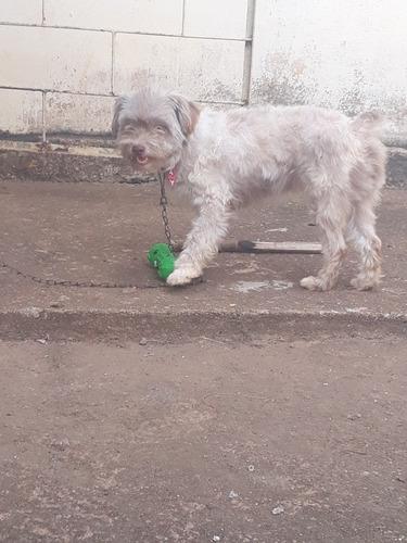 Vendo: Uma Cachorro Fêmeas Adetrantrada