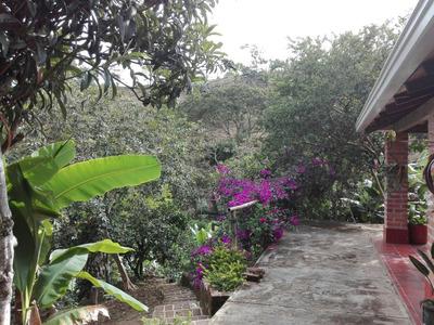 Finca Con Dos Casas Y Cultivos