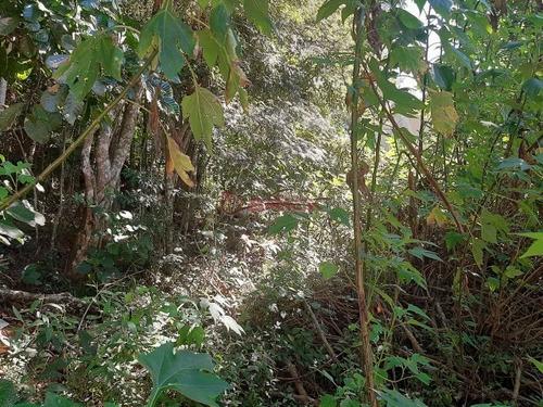 Imagem 1 de 3 de Terreno Com 4500 M² Na Iucas. - Te00403 - 69380813