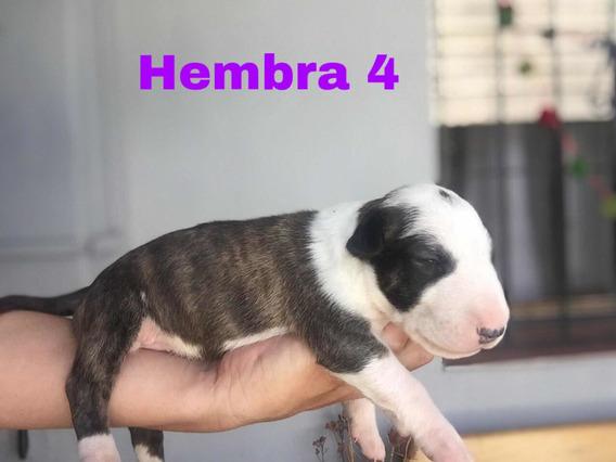 Cachorros Con Fca Hijo De Pinni De Peracho Nacidos El 28/1