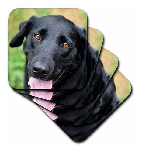 Danita Delimont  Perros  Labrador Negro  Posavasos Negro
