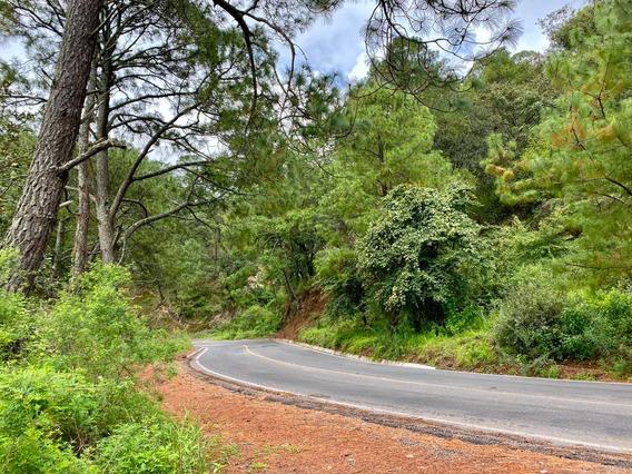Terreno En El Bosque Cerca Del Nevado De Colima, A Solo Hora