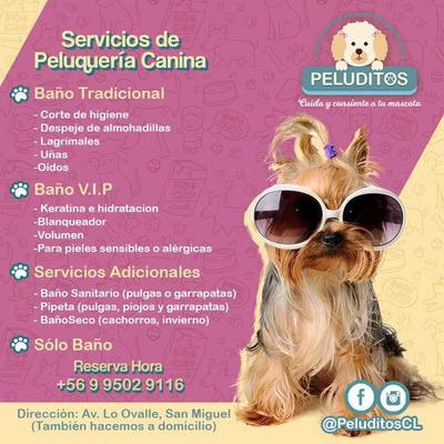 Peluqueria Canina A Domicilio En San Miguel Paseos De Perros