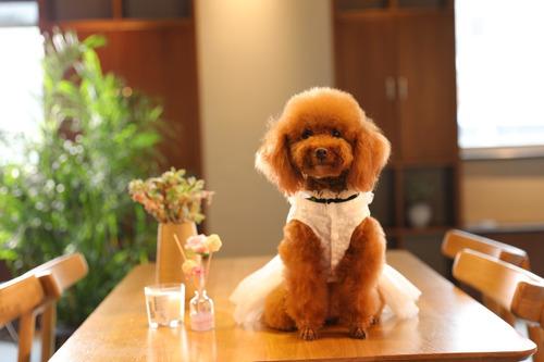 Imagen 1 de 4 de Vestido Elegante Para Mascotas