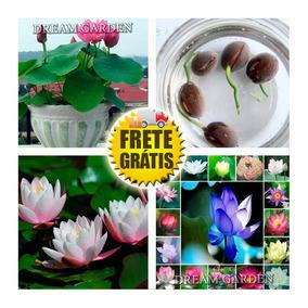 Flor De Lotus Cores Sortidas -- Sementes Flor Pra Mudas