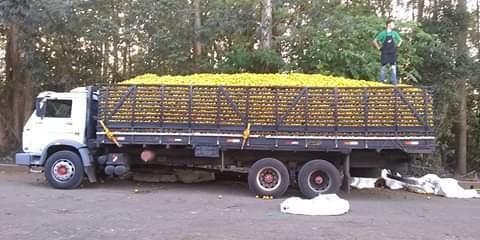 Caminhao Graneleiro Truck