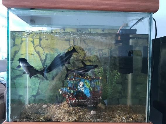 Aquário Completo-aquário Médio Com Peça De Madeira,700 Reais