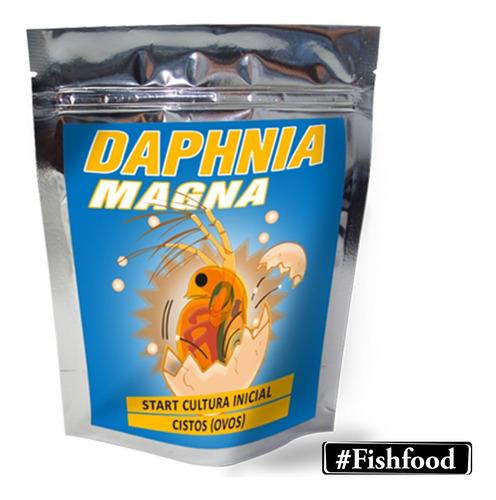 Daphnia Magna Cultura Inicial Cistos Ovos