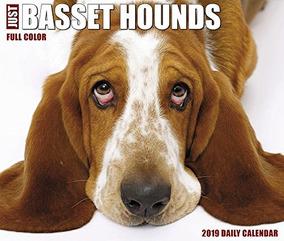 Solo Basset Hounds 2019 Cuadro Calendario Perro Raza Calenda