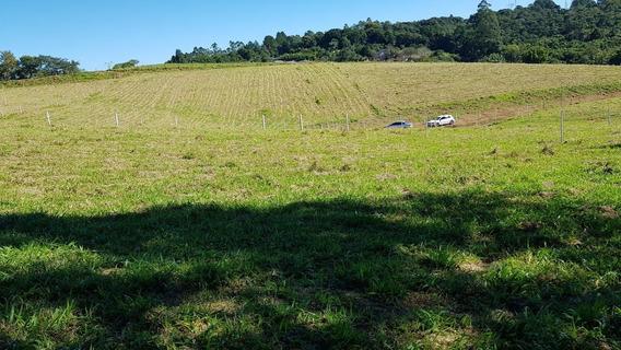 125c Terreno Ótimo Para Quem Gosta De Plantar!