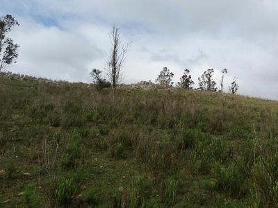 Buen Campo Agricola Ganadero Sobre Ruta 14 A 3 Km De Ruta 8