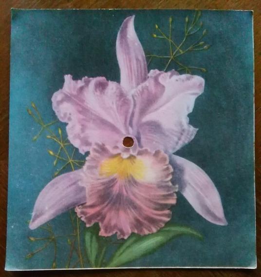 Antigua Tarjeta Postal Musical Flor