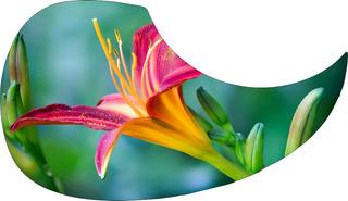 Escudo Palheteira Resinada Violão Aço Sônica B Flower