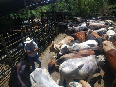 Se Vende Finca Ganadera, Valle Del Cauca