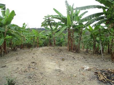 Alquilo Terreno Agrícola En Ex Cap. Santa Rosa Tambogrande P