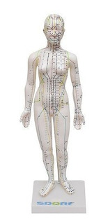 Manequim Acupuntura Feminino De 50 Cm Modelo Anatomia