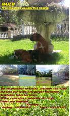 Guardería Y Pensionado Canino Todo El Año Traslado Sin Cargo