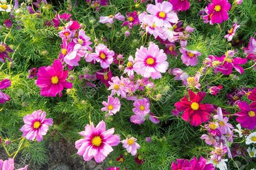 Imagen 1 de 4 de Kit 180 Semillas Florales De Estacion Para Macta O Jardin