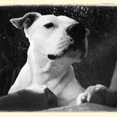 Adiestramiento Canino Basico. Correccion De Conductas.