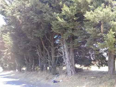 Terreno En Venta, 4,160 M2 Completo O Mitad, Ajusco. Tlalpan