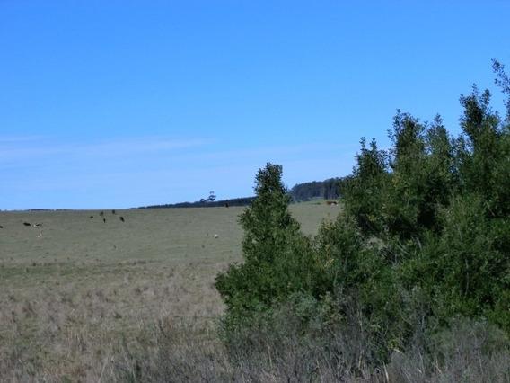 Campo 32 Has - Rocha - Uruguay
