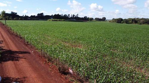 Imagem 1 de 5 de Área À Venda, 8000 M² Por R$ 960.000,00 - Imóvel Alwin - Foz Do Iguaçu/pr - Ar0014