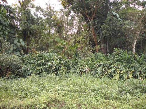 Terreno Ficando Lado Serra 1km Da Rodovia Com 5000m² 5624