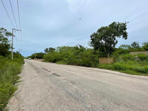 Imagen 1 de 7 de Terrenos  En Temozón Con Calle Pavimentada 1, 2 O 3 Lotes Juntos - Temozon Norte