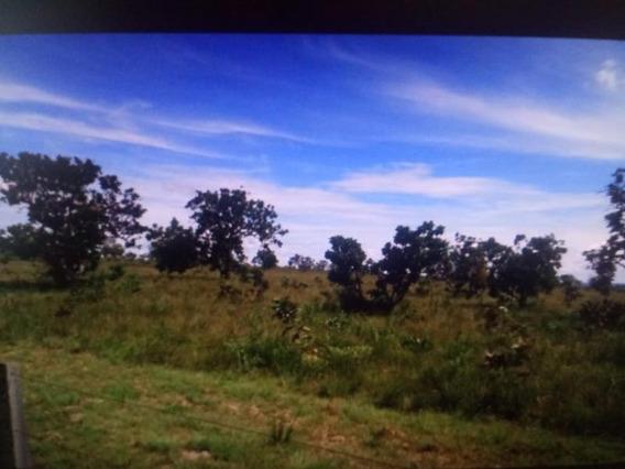 Fazenda Para Venda Em Paranatinga, Zona Rural - 989