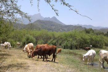 Ranchos En Venta En El Pastor, Montemorelos