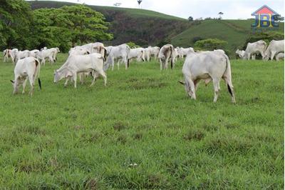 Fazendas À Venda Em Quipapa/pe - Compre O Seu Fazendas Aqui! - 1319585