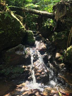 Lindo Terreno Com Cachoeira Perto De Peruíbe - Te0228