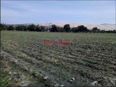 Terreno Agrícola En Venta