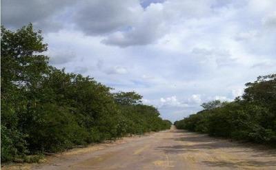 Fazenda Canto Do Buriti - Pi (agroindustria E Fruticultura) - 538