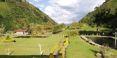 Vendo Truchera Vereda La Piedra, Andes Antioquia