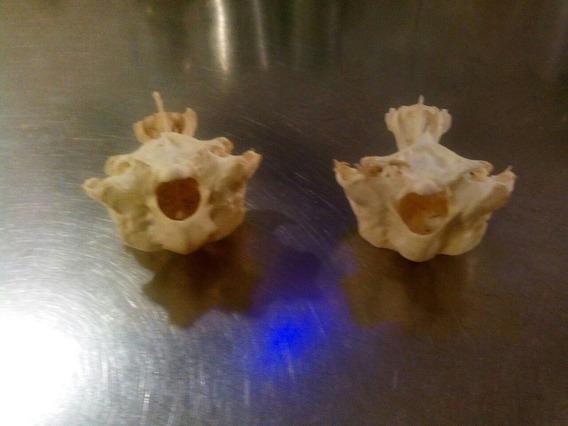 Dos Extraños Peces Fosilizados 6 X 5 Uno Con Pequeño Detalle