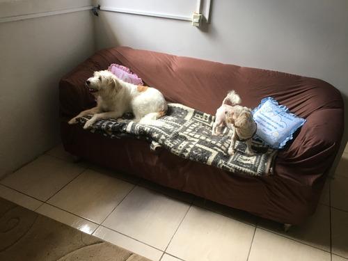 Imagem 1 de 10 de Hotel Para Cães Pequeno E Médio Porte.
