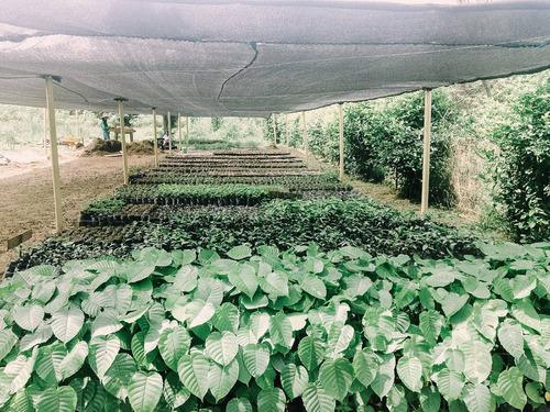 Imagen 1 de 1 de Chirimoyo