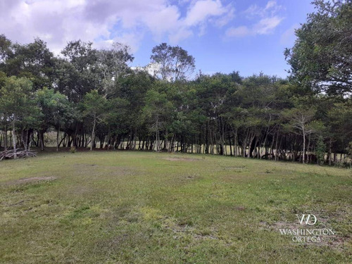 Imagem 1 de 21 de Chácara À Venda, 8500 M² Por R$ 260.000,00 - Zona Rural - São José Dos Pinhais/pr - Ch0060