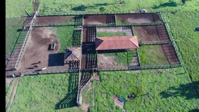 Fazenda A Venda Em Ribas Do Rio Pardo - Ms (pecuária) - 1129